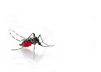 Situación del dengue en Colombia