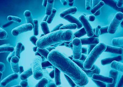 Probióticos en Discusiones Especializadas: por Expertos Mundiales
