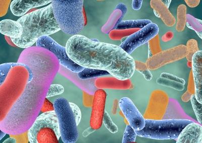 Actualización de la microbiota en la salud