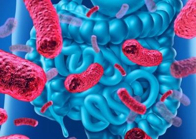 Noche de actualización en microbiota y probióticos con GICCAMPP